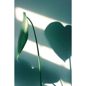 Coups de cœur